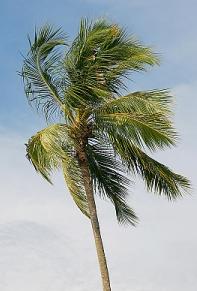 Previstos vientos fuertes / Foto: Alena Yakusheva/PhotoXpress.com