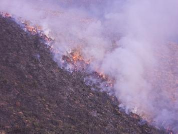 Los incendios provocados ponen en peligro la biodiversidad de la Montaña Pasiega y Oriental