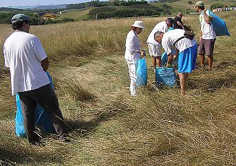Segundas jornadas de voluntariado para la restauración dunar de la Playa de Merón en San Vicente la Barquera