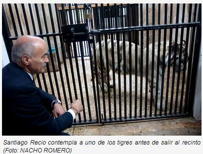 Llegan dos nuevos tigres blancos a Cabárceno (Foto: Gobierno de Cantabria)