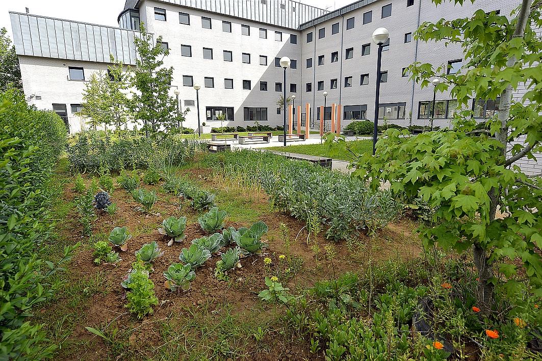 Los huertos ecológicos del centro de acogida Princesa Letizia acogerán dos jornadas de puertas abiertas