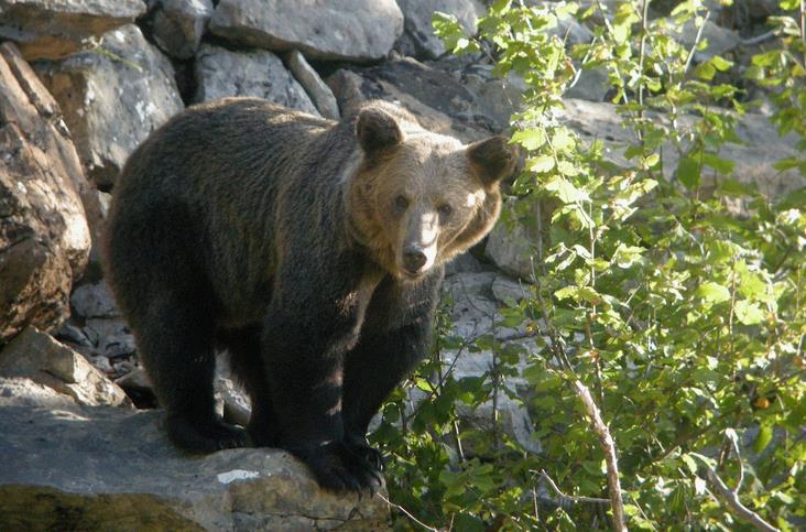 La conservación del oso pardo, a debate en el Fluviarium de Liérganes