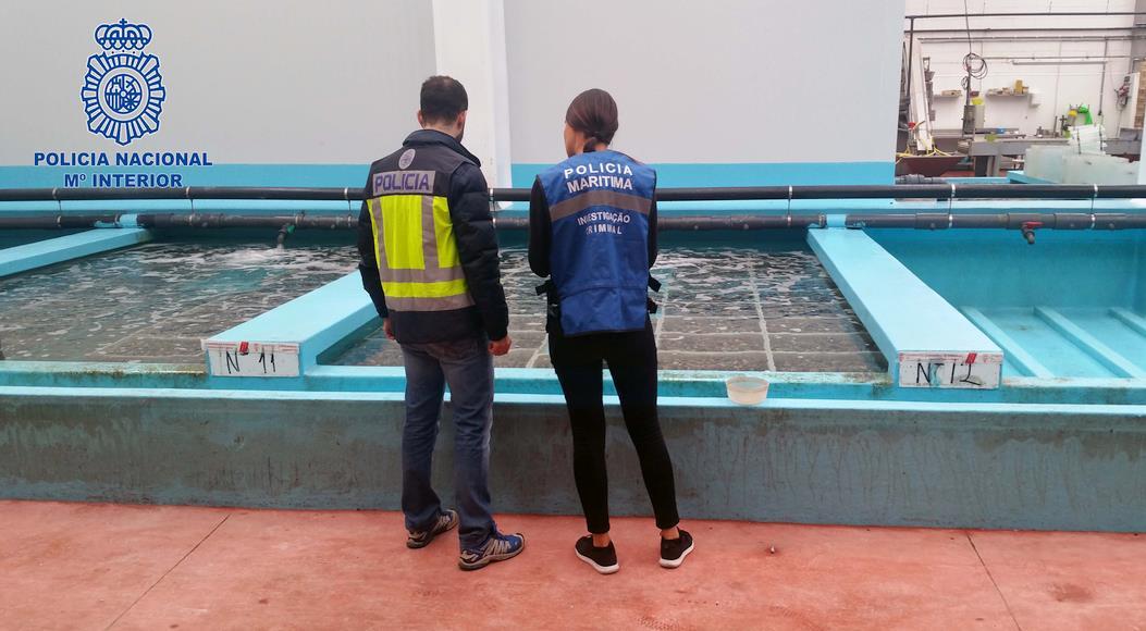 La Policía Nacional inmoviliza diez toneladas de almejas japónicas introducidas ilegalmente en España
