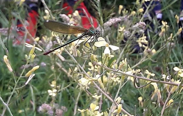 Cantabria busca su primera reserva entomológica
