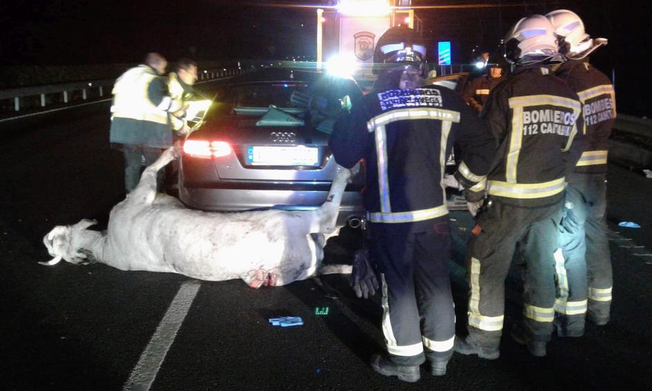 Fallece un hombre de 54 años tras colisionar su coche con una vaca en la A-8