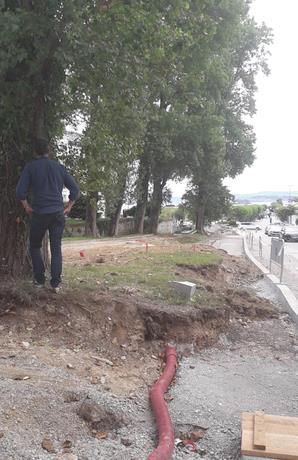 """ARCA acusa al Ayuntamiento de Santander de iniciar la legislatura """"talando árboles de gran porte en el Sardinero"""""""
