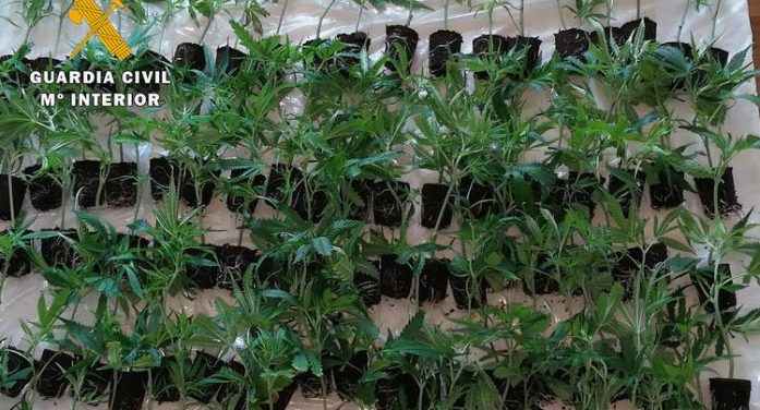 La Guardia Civil detiene a un hombre que transportaba más de 100 plantas de marihuana en su coche