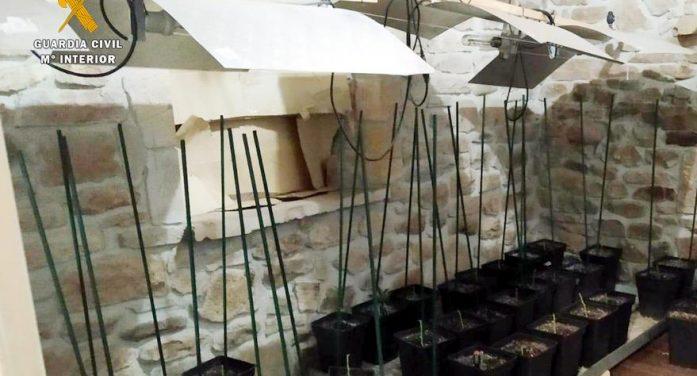 La Guardia Civil interviene casi 180 plantas de marihuana en una casa de Saro