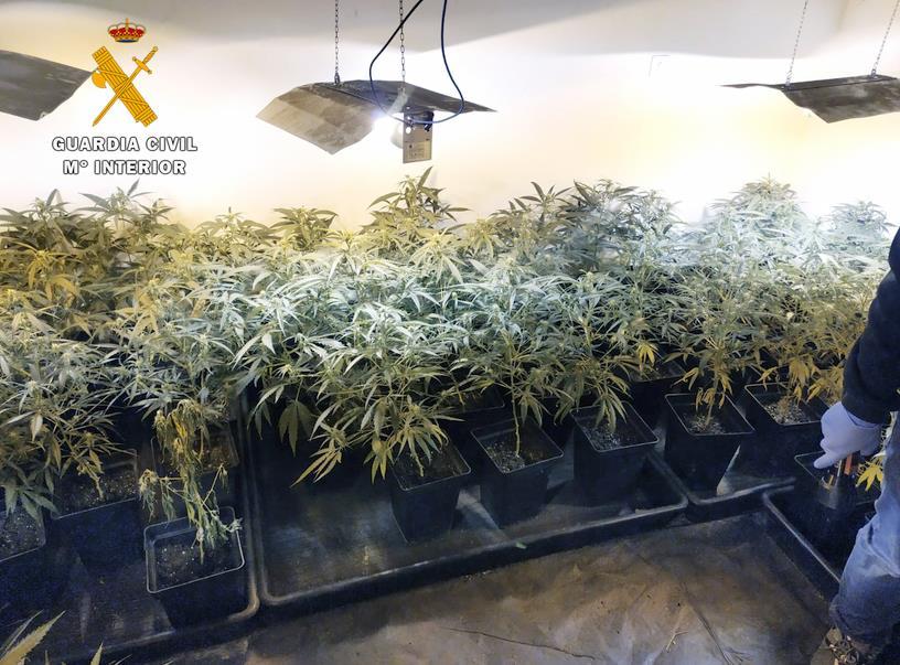 La Guardia Civil desmantela una nueva plantación de marihuana que suministraba a la zona oriental de Cantabria
