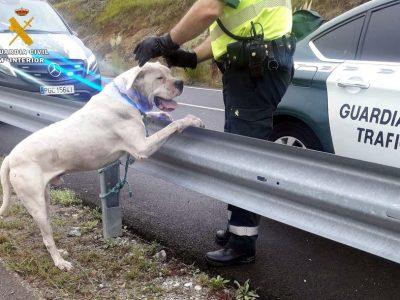 La Guardia Civil captura a un perro potencialmente peligroso, en estado agresivo y que había matado a otro animal